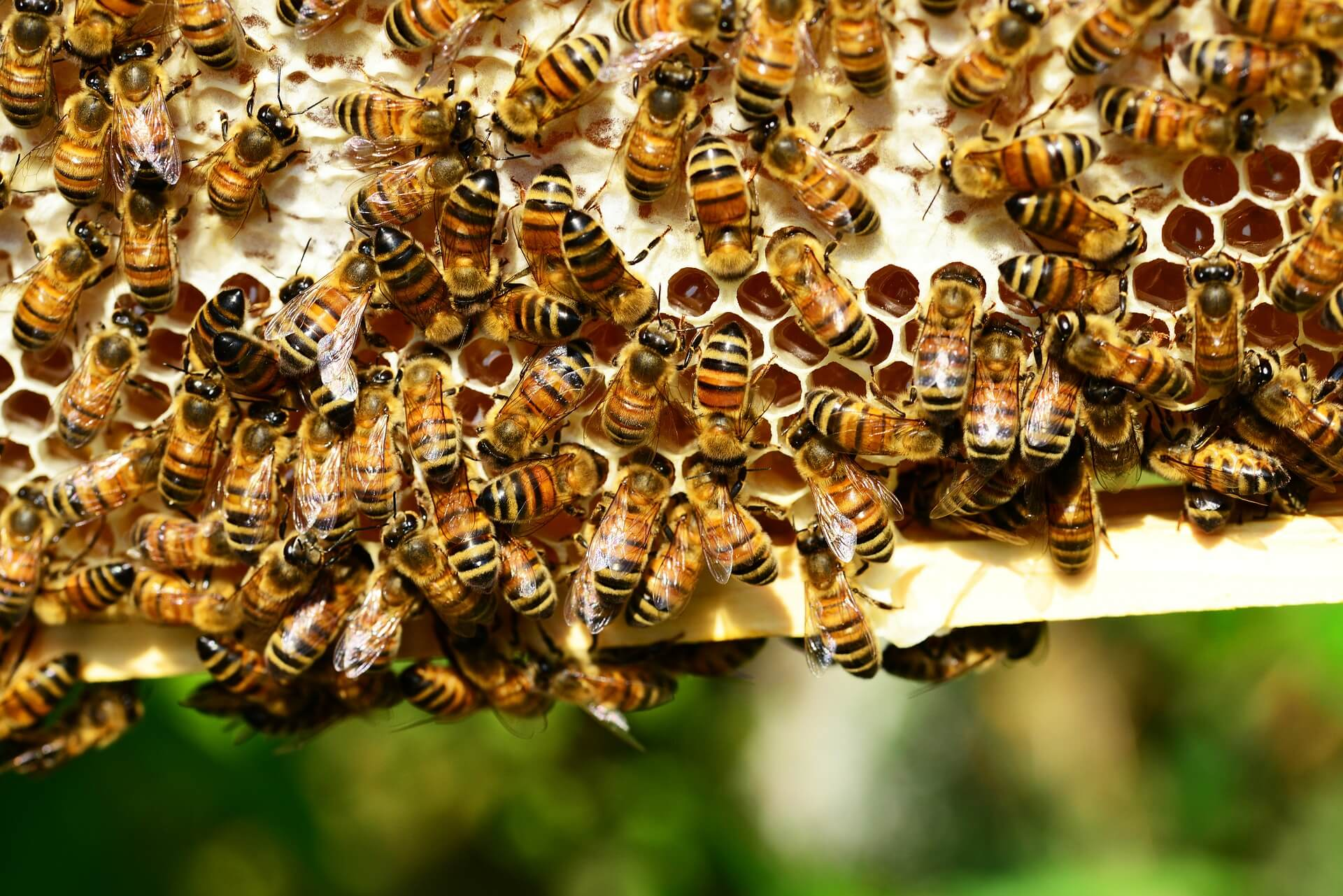Patenschaft eines Bienenvolks Bienenpatenschaft