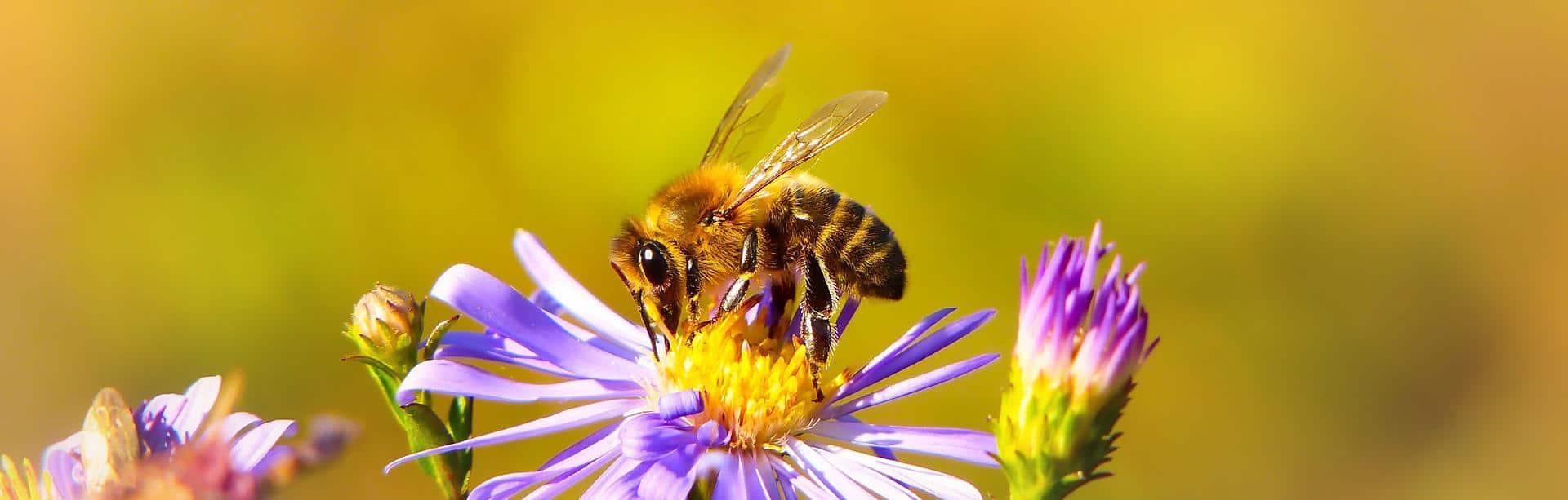 Bienenpatenschaft IT Bienen