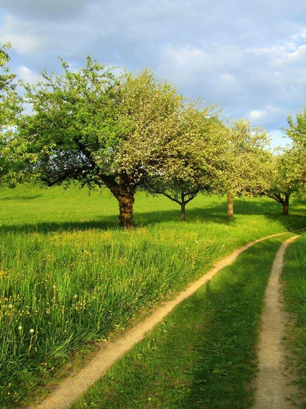 Weg zur nachhaltigen Webseite