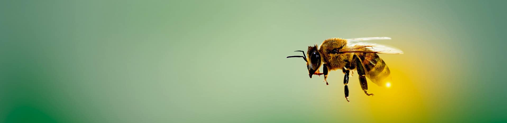 Kunden und Projekte IT Bienen